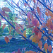 Zelkova Fall Close-up