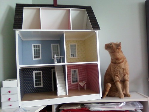Stanley cat inspects dollhouse