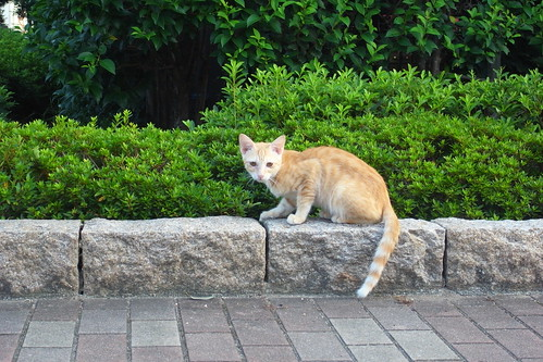 Today's Cat@2010-08-19
