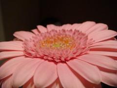 Flower (KJGarbutt) Tags: pink flowers plants colour macro green photography random sony misc cybershot kurtis miscellaneous sonycybershot oddsandends bitsandbobs garbutt kjgarbutt kurtisgarbutt kurtisjgarbutt kjgarbuttphotography