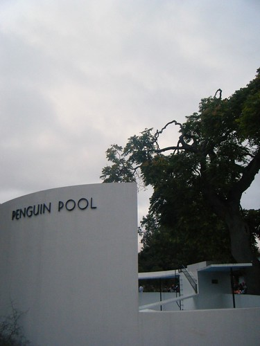 Penguin Pool - late@ London Zoo