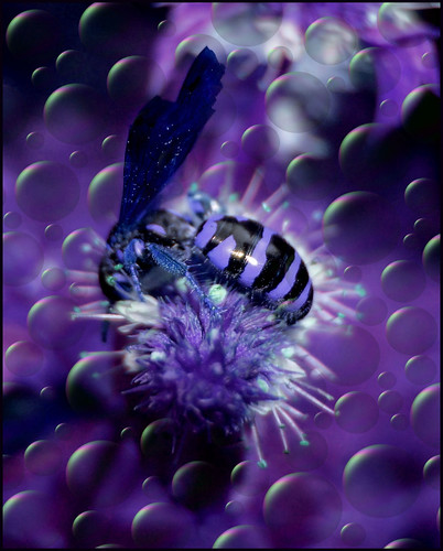 Fantasy Wasp