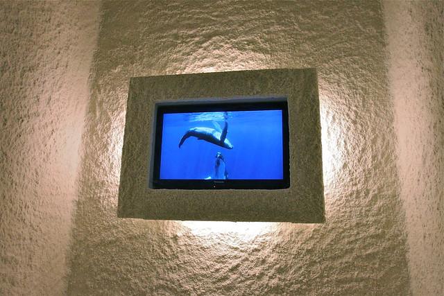 SALTY TV