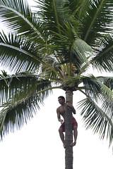 MMB_7254 (Michelle M. Bradley) Tags: hawaii unedited polynesianculturalcenter nikond700