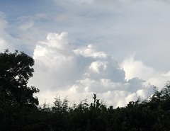 Cumulus Clouds (Louise and Colin) Tags: sky cloud beautiful skyscape view awesome cumulus cloudscape cumuluscongestus thecloudappreciationsociety justclouds gavinpretorpinney thecloudcollectorshandbook