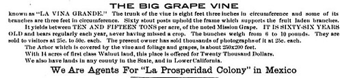 Grapevine for Sale 1907 Fruit and Nut Journal