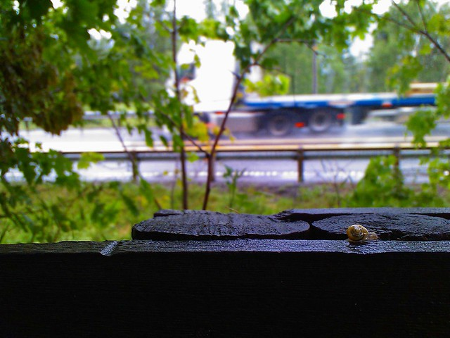 Closeup of a snail crawling along a wooden fence, in the background a (blurry) truck can be seen moving in high speed.