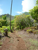A Trail in The Woods, Nuku Hiva