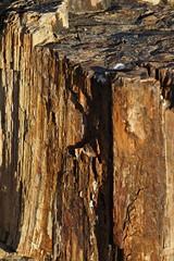 forêt pétrifiée du Damaraland MG_7465 (photostudio63 photographe clermont ferrand) Tags: voyage africa travel vertical travels desert south tropic circuit namibia aout roche 2010 capricorn afrique namibie damaraland jaspe australe tropique cristalisation pétrification forêtpétrifiée photostudio63 photographeclermont63fr photostudio63fr photographeclermontferrand photographeclermont63com photostudiocom thierrytavares