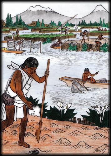 Chinampas - Aztèques