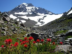 Red Contrast by Nina (alpenglowtravelers) Tags: flowers mountain snow mountains flower oregon volcano mount cascades hood wildflowers volcanoes wilderness paintbrush mounthood indianpaintbrush dormantvolcano mounthoodwilderness dormantvolcanoes wonderfulworldofflowers