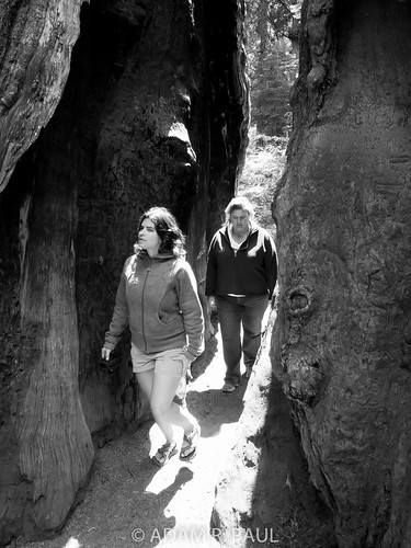 Elica & Sarah in Sequoias