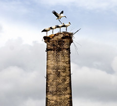 nest (isabel cortes) Tags: sevilla nest stork cigea isabelcorts