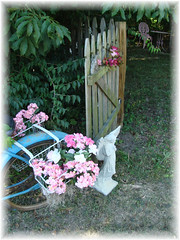 Enchanted Garden Entrance (Bluebird Becca) Tags: old pink flowers blue bike bicycle rose angel vintage fence garden concrete wooden gate secret rusty enchanted picket