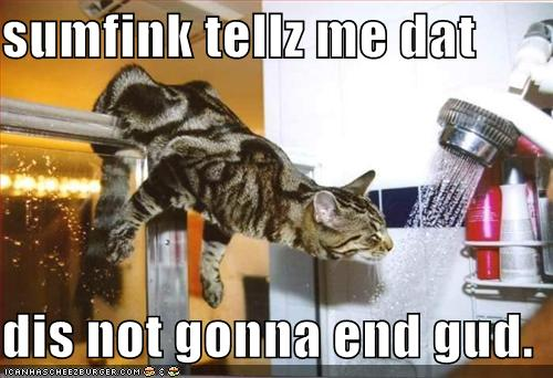 funny-pictures-cat-has-an-idea-that-this-will-not-end-well