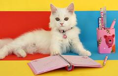 SoSo --> is ready for school (Maryam.Ibrahim) Tags: