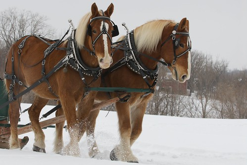 2011 Horse and Sleigh Festival - Woodbur by pmarkham, on Flickr