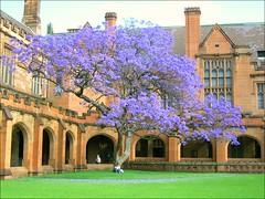 S. (Dminkus) Tags: new tree wales university south under sydney australia down nsw inside universitt australien baum dominik minkus dminkus minkusd