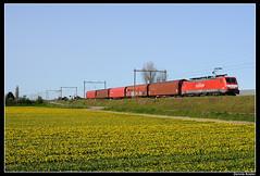 DBS189076+61265_Hil_10042011 (Dennis Koster) Tags: db rd trein dbs rn railion beverwijk narcissen bollenveld hillegom br189 goederentrein dbschenker rilns staaltrein 189076 61265kfhnbvhc
