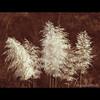 Plumas (Martha MGR) Tags: nature duotone landscaps plumas mmgr idream marthamgr marthamariagrabnerraymundo marthamgraymundo
