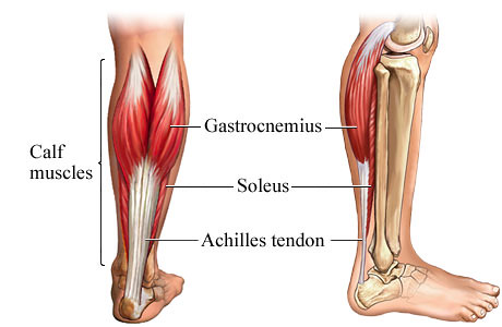 Stretch your calf muscles muscles which both attach at your heel via your achilles tendon this lovely strong part of your lower leg has a few important jobs to do as you go ccuart Image collections