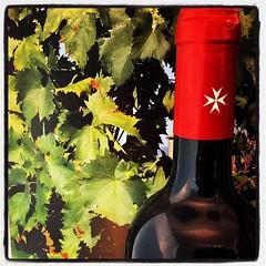 19228092_113328975943346_1351202234649542656_n (cybr_gio) Tags: sagrivit castellodimagione roccabernarda villagiustiniani sfida passione tradizione vino wine winelovers wineoclock winetime foodwine