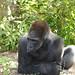 MonkeyJungle19