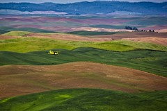 Crop Duster over the Palouse (Alan Amati) Tags: amati alanamati america american usa us wa washington pacificnorthwest palouse thepalouse nw northwest farm farms fields wheat plane byplane airplane crops crop cropduster hills rolling spring steptoe steptoebutte colfax state statepark park landscape