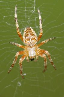 365 - Image 187 - Spider... **Explored**
