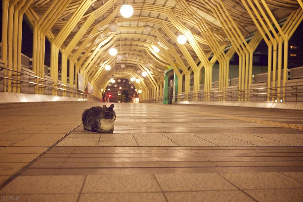 Cat in midnight #7