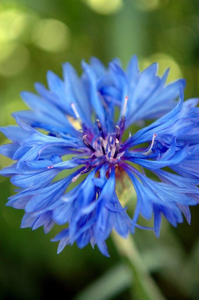 Blue Buddy #2 by Nikon D70