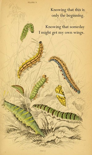 acaterpillars