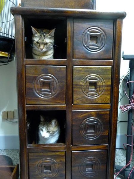 收納貓咪5
