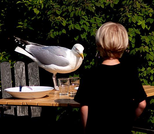seagull+adam