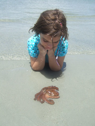 Beth watches an octopus