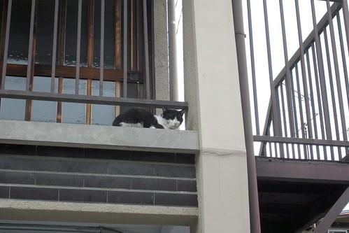 Today's Cat@2010-06-29