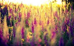 a new leaf (andrew evans.) Tags: lighting morning light summer england sun nature fairytale sunrise landscape golden kent nikon bokeh ethereal wonderland storybook magical 70200 f28 enchanted d3