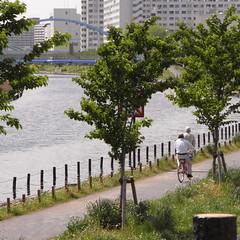 Sakai-bashi Bridge 02