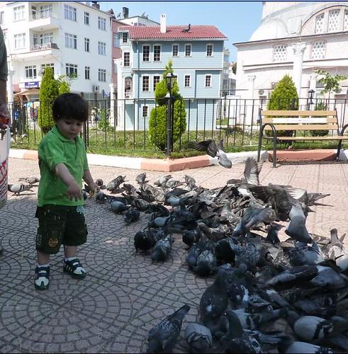 kuşlar4
