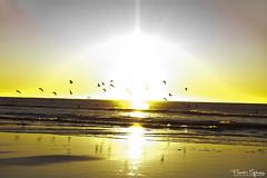 El Despertar de las Golondrinas I (FlavioSpezia) Tags: ocean sea sky costa sun reflection sol beach skyline clouds sunrise coast mar town nikon pueblo playa amanecer cielo nubes reflejo horizonte oceano golondrinas orilla sanbernardo terns costaatlantica d40