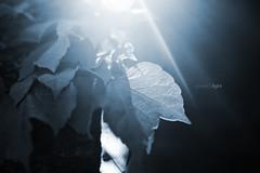 + energy (R Perdigo) Tags: blue light energy nikkor nikond40