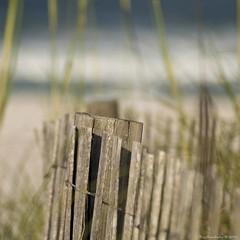 Dune Fence-keh (raisinsawdust - (aka: tennphoto)) Tags: beach fence square nikon surf florida bokeh dunes dune sanddune sanddunes 2010 d90 dunefence woodslats nikond90 dunefences oceanfloridavacation