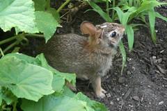 bunny 279