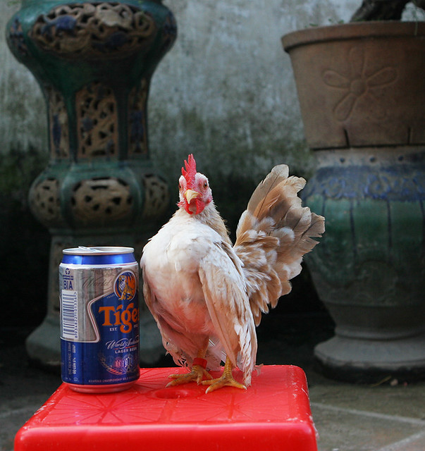 Trai gà serama A bán giá bộ đội......! - 14