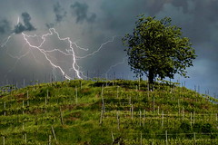 Cime tempestose (LorenzpuntoG) Tags: albero collina vento tempesta fulmine sfidephotoamatori lorenzg lorenzpuntog