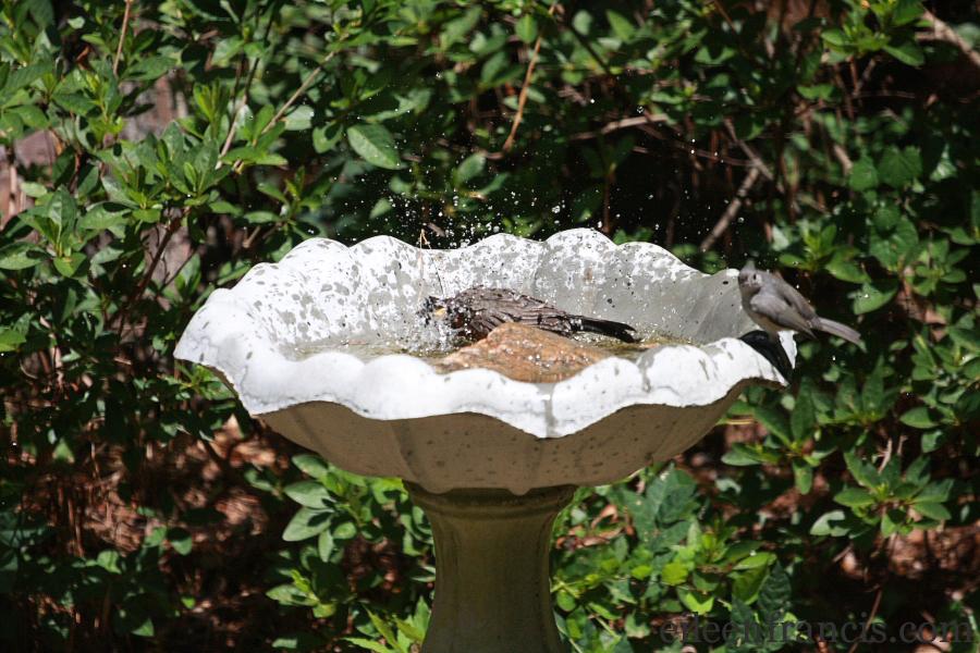 birdbath101web