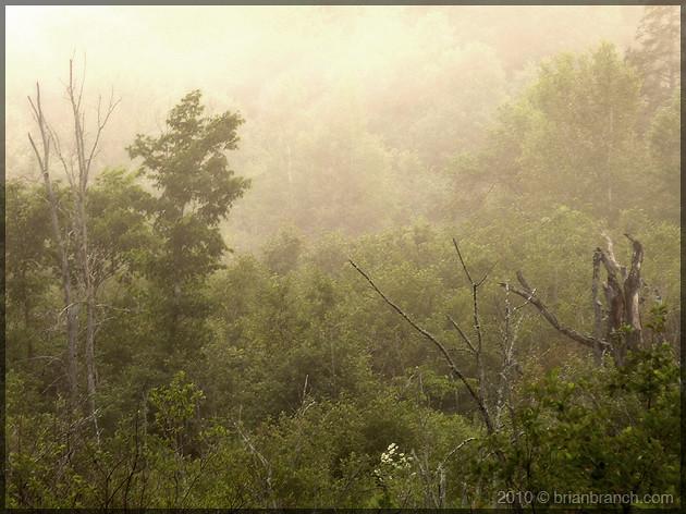 P1110154_fog