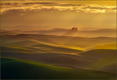 Small Forest, Palouse Hills (Chip Phillips) Tags: trees sunrise landscape photography golden washington butte state northwest phillips hills chip inland rolling palouse steptoe saariysqualitypictures créatitudesnolimits