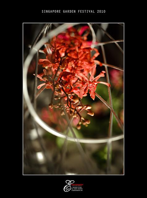 Flowers - 005
