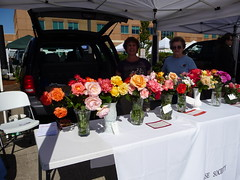 Albany Rose Society brings beautiful display
